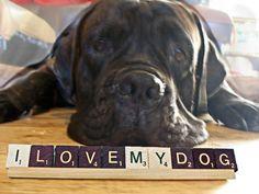 I Love My Dog  Decor Great Gift Item or For by vintagelovesandmore