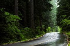 Always good for a scenic drive: The Aufderheide Forest in the Willamette National Forest east of Eugene, Oregon.