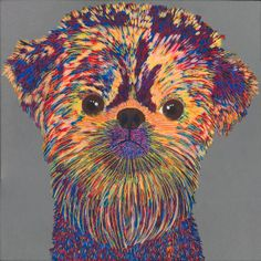 Brussels Griffon - very cool!