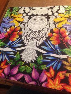 Owl Secret Garden Coruja Jardim Secreto Johanna Basford