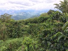 Mountains, Nature, Travel, Natural Resources, Colombia, Naturaleza, Viajes, Trips, Off Grid