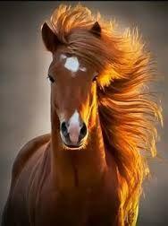 Výsledek obrázku pro fire horse