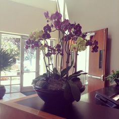 Delta Dental #orchid