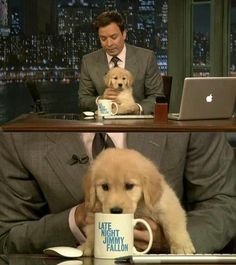 Jimmy Fallon + puppy = adorable. You doesn't like a man who can make you laugh AND let's the dog drink from his mug! :)