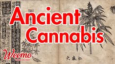 The oldest cannabis smokers are not your father, or his mother, or the weird guy down the street. However, it was the ancient people of central Asia were the first to use cannabis smoke. Bob Marley Quotes, Cannabis Edibles, International Teams, Old Cemeteries, Buy Weed, Central Asia, Smokers, You Are The Father, Hemp