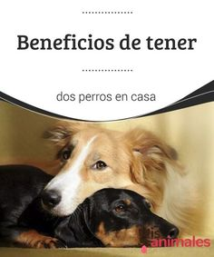 All About Animals, Ten, Pet Care, Dog Breeds, Garden Design, Puppies, Tobias, Poodles, Hulk