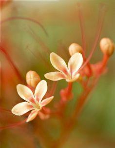 macro photography by Anna Kwa