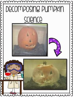 Pumpkin lesson plans and ideas for the months of October and November! Patch Palooza and a FREEBIE