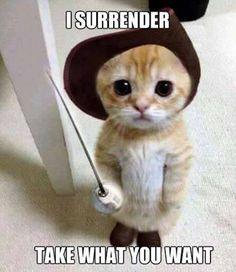 Cute Cats And Kittens Hd Wallpaper Cute Kittens Online Cute Little Animals, Cute Funny Animals, Funny Cute, Funniest Animals, Humorous Animals, Happy Animals, Super Funny, Cute Cats And Kittens, Kittens Cutest