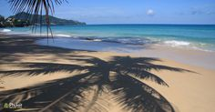 Palm Tree Shadow on Surin Beach, Phuket, Thailand on a sunny day. Image by Kevin Hellon. Beaches In Phuket, Phuket Thailand, Snorkelling, Turquoise Water, Hotels And Resorts, The Locals, Palm Trees, Sunny Days, Surfing