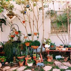 amazing little potted garden