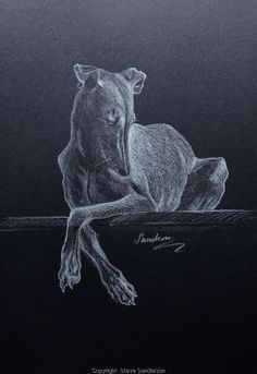 Steve Sanderson drawing using conte pencil on black paper. Animal Paintings, Animal Drawings, Art Drawings, Greyhound Art, Whippet Dog, Crazy Dog Lady, Lurcher, Grey Hound Dog, Whippets