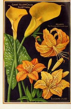 John Lewis Childs Seed Company Catalogue - 1923