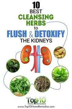 10 Best Herbs to Flush Bacteria, Germs, Toxins and Other Harmful Materials Out o… - Health Detox Healthy Kidneys, Healthy Detox, Healthy Drinks, Detox Foods, Food Good For Kidneys, Healthy Food, Natural Detox Drinks, Natural Colon Cleanse, Kidney Detox Cleanse