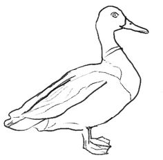 How to Draw a Duck, step 5
