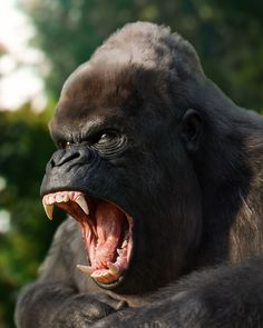 Hannya Samurai, Gorilla Tattoo, Silverback Gorilla, History Tattoos, Tropical Animals, Flying Monkey, Figure Drawing Reference, Mundo Animal, Animal Heads