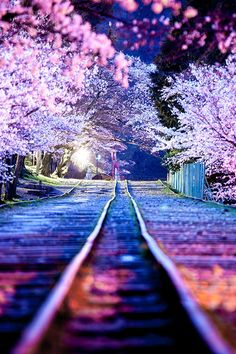 Gorgeous! Sakura. #PlacesToGetLucky || curated (for your pleasure) by your friends at LuckyBloke.com