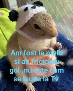 Tv, Animals, Animales, Animaux, Television Set, Animal, Animais, Television