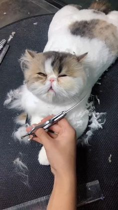 cat recipes monty the cat cats things cat base awesome cats cat and dog lost cat cat craft funny kitty cats cat tutorial Cute Baby Cats, Funny Cute Cats, Cute Little Animals, Cute Cats And Kittens, Cute Funny Animals, Kittens Cutest, Pet Cats, Cute Cat Gif, Kitty Cats