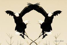 Bald Eagles Art Southwestern Bird Decor Native by GrayWolfGallery