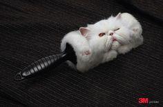 Rolled Cat Hair Lint Roller Advert