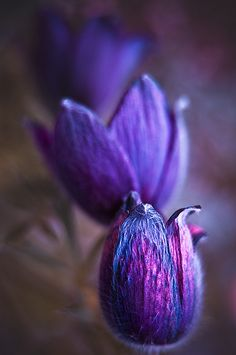 ~~The Purple by Magda Wasiczek Nature~~