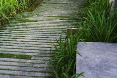woodland paving landscape architecture - Google Search