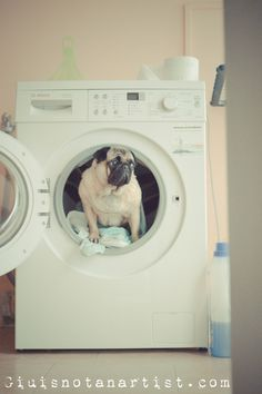 Bet if you had a towel warmer, this would not be a problem.... #pug #dog #cute #pets