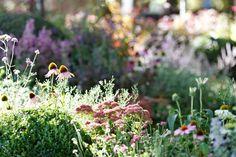 """The New Wave"" by Ian Barker Gardens, Melbourne International Flower & Garden Show 2013 Garden Design Images, Landscape Design, Garden Show, Summer Garden, Hampton Garden, Garden Borders, Climbing Roses, Flower Show, Garden Accessories"
