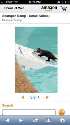 Scamper ramp to help animals get out of pool if they fall in