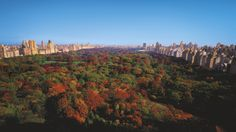 The Ritz-Carlton New York, Central Park - Central Park as viewed from The Ritz-Carlton New York, Central Park