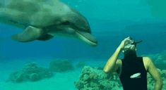 Diver comes across friendly Dolphin. : Eyebleach