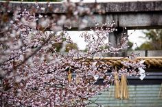 kyoto Four Seasons, Kyoto, Japan, Flowers, Plants, Inspiration, Biblical Inspiration, Japanese Dishes, Seasons Of The Year