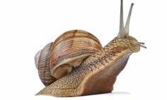 Polskie ślimaki ruszają z kopyta