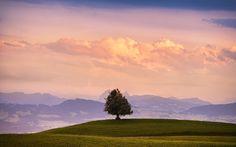 tree #4k wallpaper (3840x2400)