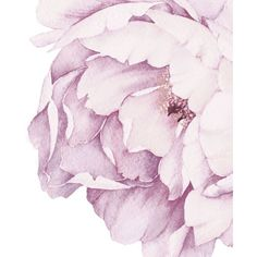 Peony Flowers Wall Decal (331.825 COP) ❤ liked on Polyvore featuring home, home decor, wall art, photo wall art, blossom wall decal, flower wall art, flower wall stickers and peony wall art