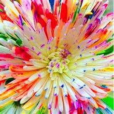 Best-Selling! 100 Seeds A Pack Rainbow Chrysanthemum Flower Seeds rare color new arrival DIY Home Garden flower plant
