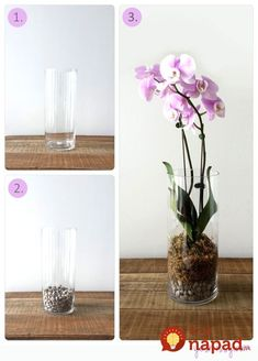 Create fun little garden. Make your own cactus terrarium garden in a few easy steps! You'll just need some tall glass vases and some. Terrarium Cactus, Garden Terrarium, Garden Plants, Indoor Plants, House Plants, Terrarium Wedding, Orchid Pot, Orchid Plants, Orchid In Vase