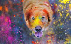 Perro con pintura