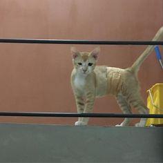 Good morning 😺#chuty#srilanka#temple#cat#cats#catstagram#cute#cutie#kitty#eyes#gato#gatto#kucing#katze#popoki#happy#Love#straycat #minnie#愛娘#愛猫#愛猫家#ミニー #ミニーちゃん#女の子#gril#おてんば娘 #大好き#かわいい #親バカ部