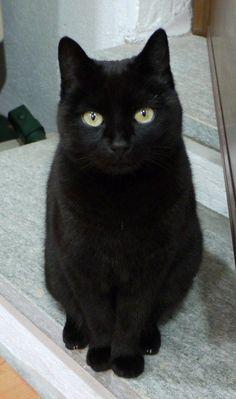 video černé kočičky