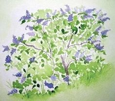 The Lilac  print of an original watercolor by MarthaKuperBrinson, $14.95 Lilac Flowers, Spring Flowers, Lavender Blue, Purple Sage, Lilac Bedroom, Art Mat, Green Grass, Watercolor Print, My Favorite Color