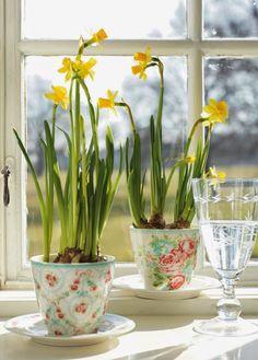 Schöne Frühlingsdeko mit Zwiebelblumen in altem Porzellan. Noch mehr Deko Ideen gibt es auf www.Spaaz.de