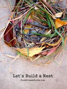 building a bird's nest using items gathered from nature walk. Appreciation for the hard work a bird does to build a nest that sticks together and can hold eggs Forest School Activities, Nature Activities, Spring Activities, Preschool Activities, Preschool Curriculum, Indoor Activities, Family Activities, Outdoor Education, Outdoor Learning