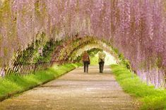 Garden Wallpaper Other Nature Wallpapers) – Art Wallpapers Garden Wallpaper, Frühling Wallpaper, Wallpaper Pictures, Nature Wallpaper, Widescreen Wallpaper, Free Spring Wallpaper, Wisteria Tunnel, Tree Tunnel, Spring Pictures