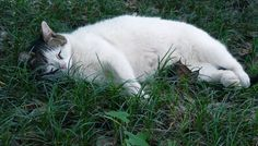 お昼寝最中にゃ~の猫(A-002)猫写真-横浜 #猫写真