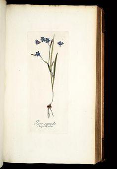 1781 - Icones plantarum rariorum /editae Nicolao Josepho Jacquin.