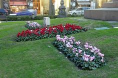 giardini con ciclamini