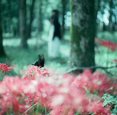 pink and teal woodlands | by talowww