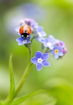 Forget me not by Mandy Disher Florals